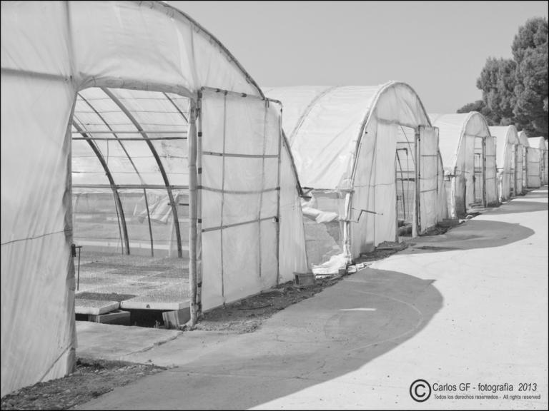 Invernaderos abiertos