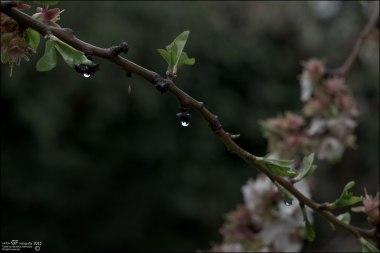 Llueve y llueve